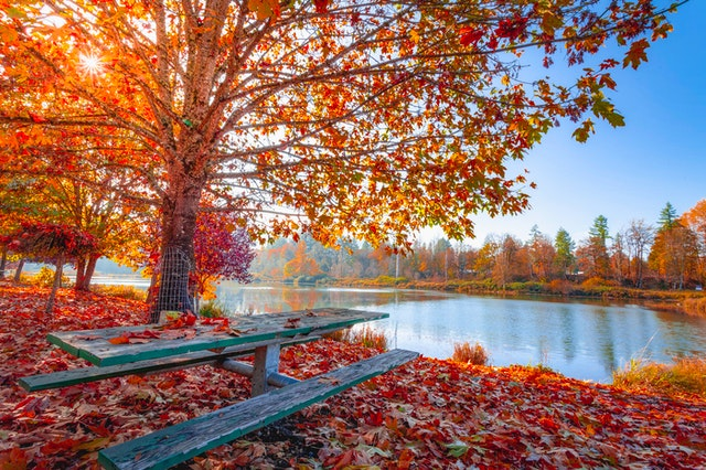 red-and-orange-autumn-leaves-on-the-ground-and-on-trees-